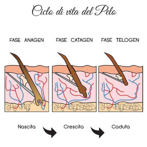 CICLO-vita-pelo